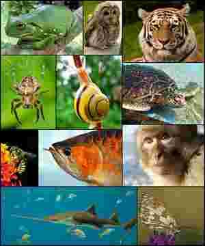 Diverse forme di vita animale