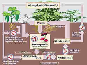 I movimenti dell'azoto tra atmosfera, suolo e biosfera